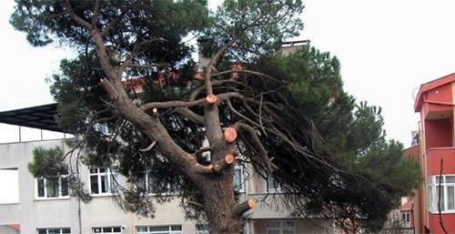200 yıldır mahalleye hayat veren çam ağaçları, kimliği belirsiz kişiler tarafından güpegündüz traşlandı. Küçük Çamlıca sakinleri olaya sert tepki gösterdi.