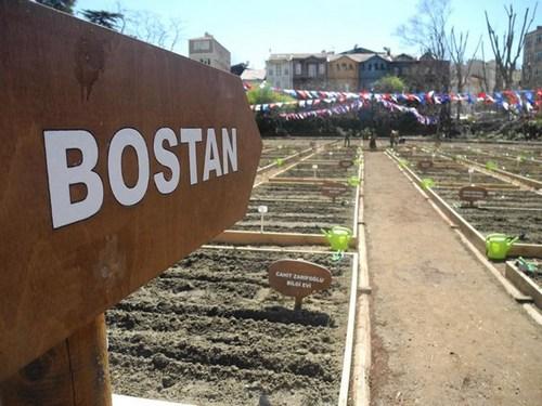 Üsküdar Belediyesi'nin Kuzguncuk Bostanı Projesi' kapsamında bostan olarak belirlenen ve ekime hazır hale getirilen dikim alanına, gerçekleştirilen ?Kuzguncuk Bostanı Bahar Şenliği' etkinliğiyle domates, biber ve patlıcan tohumu ekildi.