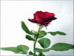 Üsküdar`da ''Sevgi Evi'' açılıyor