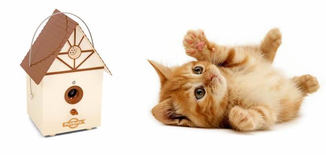 Evde Kedi Beslemek İstiyorum, Hangi Malzemelere İhtiyacım Olacak?