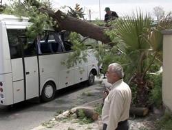 Servis otobüsü devrilen ağacın altında kaldı