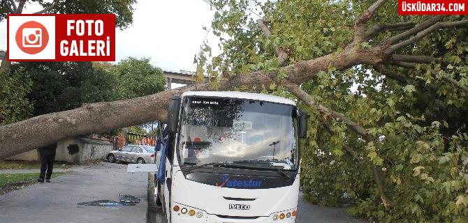 Üsküdar'da etkili olan fırtına ağaçları devirdi