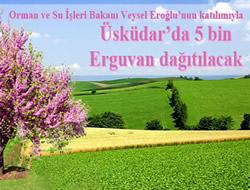 Üsküdar'da 5 bin Erguvan dağıtılacak